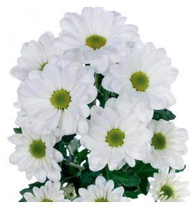 Хризантема белая (ветка)