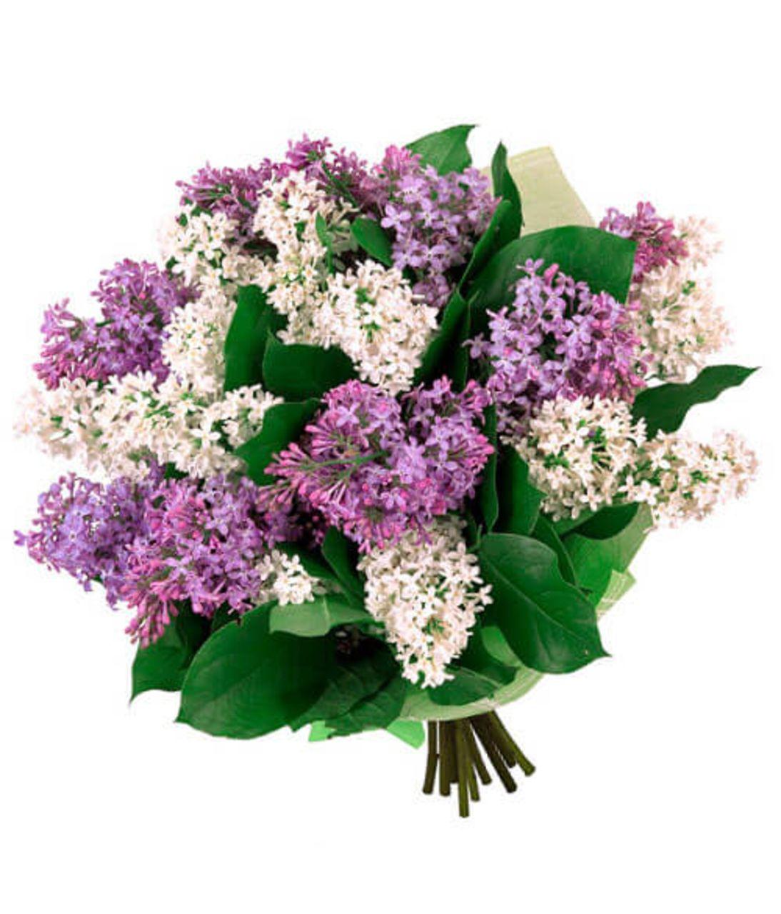 """Букет из сирени """"Виолетта"""". Superflowers.com.ua"""