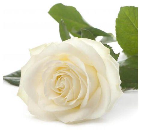 Белая роза поштучно. Superflowers.com.ua