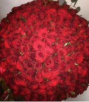 201 троянда Ніцца