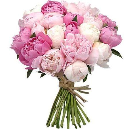 Букет из 25 пионов. Superflowers.com.ua