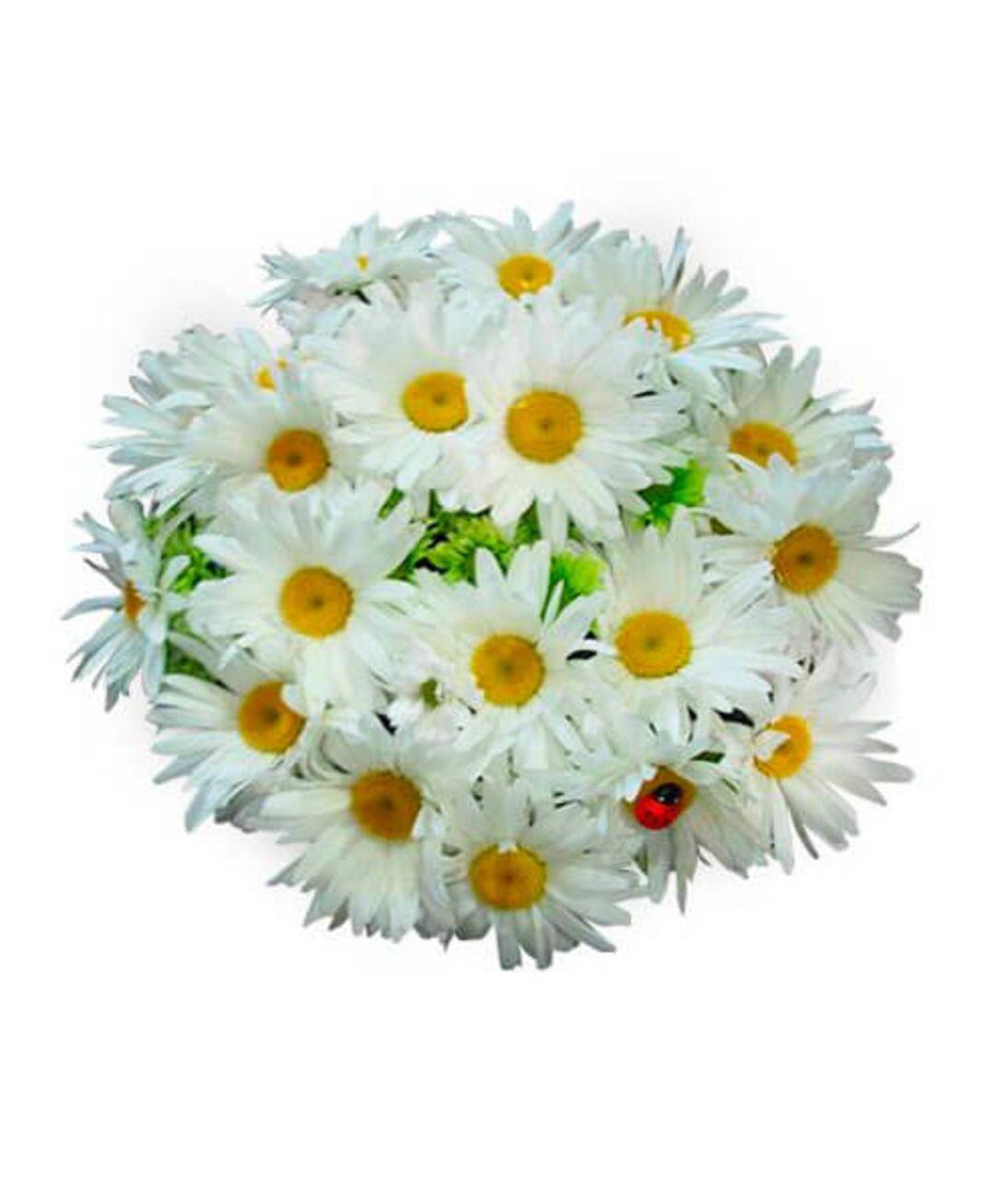 Букет из 25 ромашек. Superflowers.com.ua