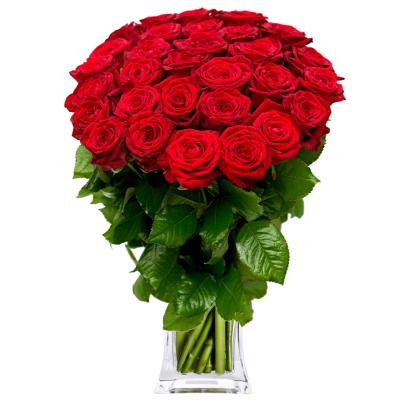 Букет 51 червона троянда, 80 см