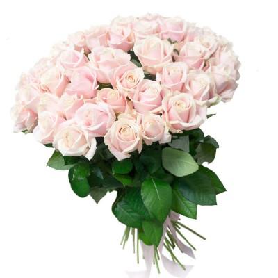 """51 роза Талеа """"Нежность рассвета"""""""