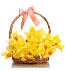 """Нарциссы в корзине """"Отражение весны"""""""