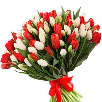 101 тюльпан: белый и красный