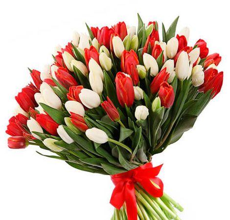 101 тюльпан белый и красный. Superflowers.com.ua