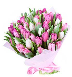 """51 тюльпан """"Брависсимо"""". Superflowers.com.ua"""