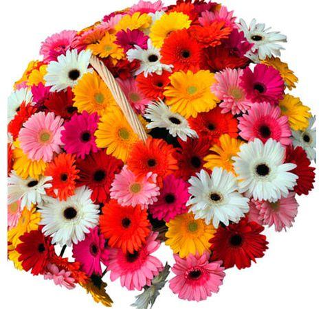 Кошик з гербери. Superflowers.com.ua