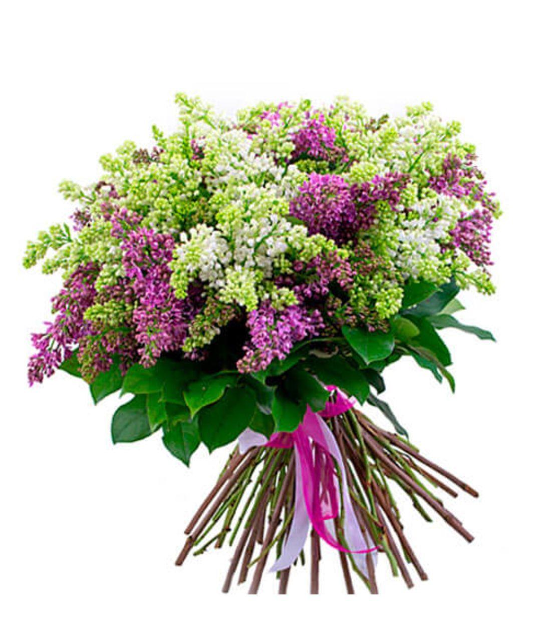 Великий букет з бузку. Superflowers.com.ua