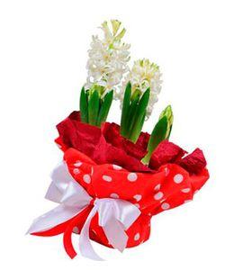 Букет гиацинтов. Superflowers.com.ua