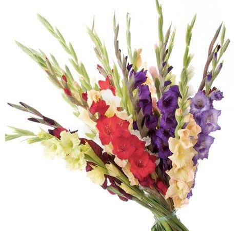 Букет з 21 гладіолусів. Superflowers.com.ua