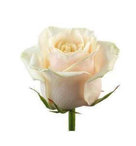 Кремові троянди поштучно