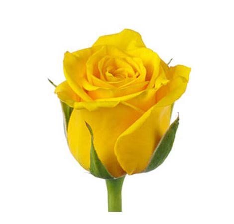 Желтые розы поштучно. Superflowers.com.ua